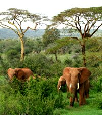 ReincarnationPastLifeResearchAfricanElephants2